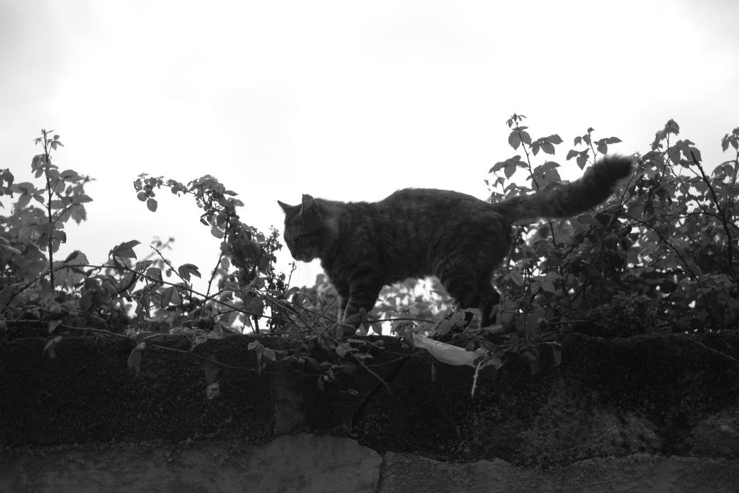 Stray Cat Header